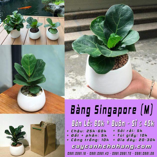 bang Singapore